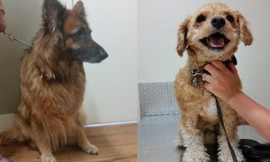 Cassie & Charlie – anal gland adenocarcinoma