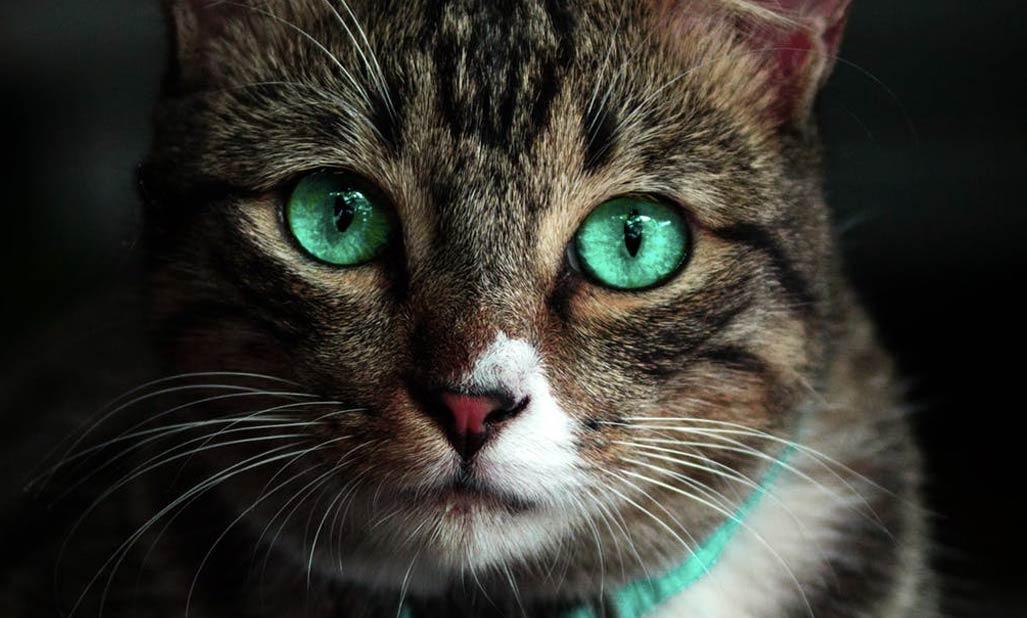 eye surgery in pets