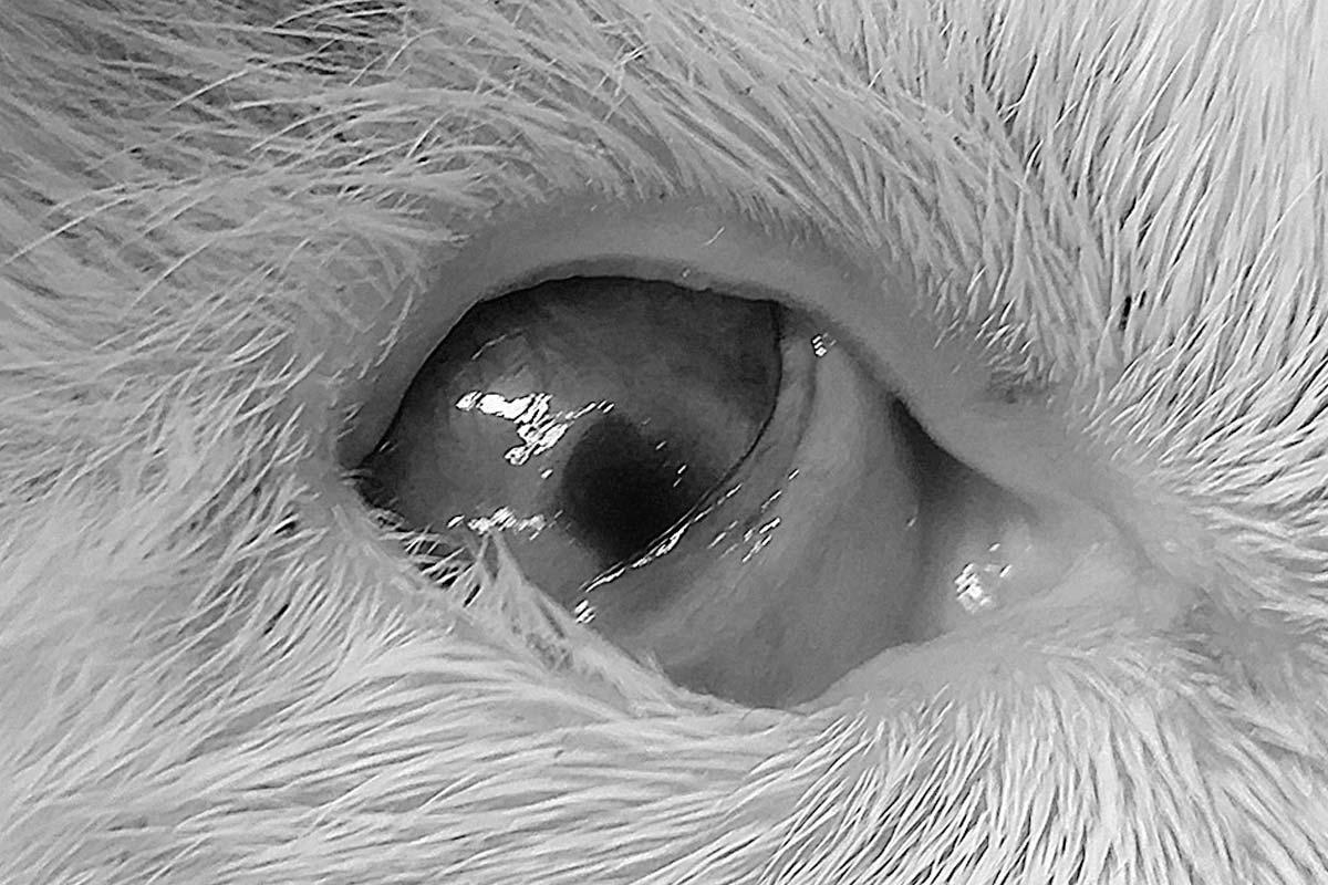 corneal ulcers surgery